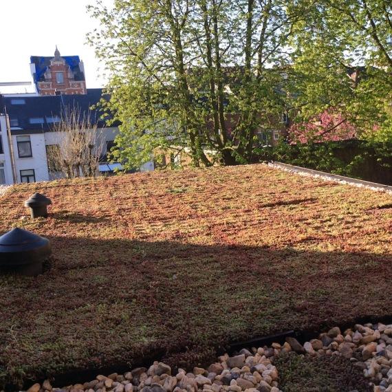 De tuinman - lint - aanleg groendaken 3