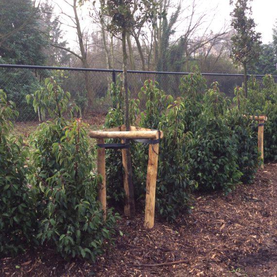 aanplanting groenbuffer (7)
